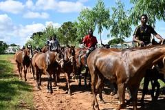 equestrian (4)