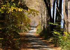 Woodland Trail (Diane Marshman) Tags: autumn fall foliage leaves trees colors yellow orange green color dirtroad dirt road country rural setting area path pa pennsylvania nature secluded narrow