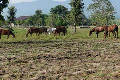 equestrian (16)