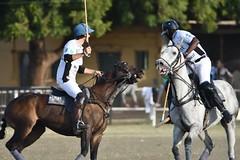 equestrian (10)