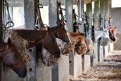 equestrian (3)