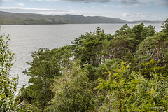 One of several Pine Plantations to shelter the plant-life of Inverewe Gardens, Loch Ewe. (Scotland by NJC.) Tags: coastline 海岸线 litoral côte küste linea costiera 海岸線 해안선 seashore coast shore seaboard seaside beach strand hill تَلّ colina 小山 brdo kopec bakke forhøjning landskabet heuvel mäki colline hügel λόφοσ collina 丘 언덕 ås wzgórze deal холм backe เขาเตี้ยๆ village قَرْيَة vila 村庄 selo vesnice landsby dorp pueblo kylä dorf χωριό paese 村 마을 wieś aldeia trees foliage vegetation arboretum شَجَرَة árvore 树 나무 tre drzewo copac дерево inverewegardens lochewe poolewe westerross scotland