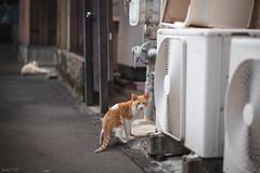 猫 (fumi*23) Tags: ilce7rm3 sony sel85f18 85mm fe85mmf18 emount a7r3 animal alley cat chat kitten kitty katze neko ねこ 猫 ソニー 路地