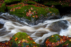 Rainforest Creek During the Fall Season (EdBob) Tags: river creek autumn fall mtbakersnoqualmienationalforest naature outdoors bakerlake leaves colorful silky silkywater water rocks rock stream motion flow flowing rainforest rocky landscape graphic closeup pacificnorthwest washington washingtonstate westernwashington edmundlowephotography edmundlowe edlowe america usa allmyphotographsare©copyrightedandallrightsreservednoneofthesephotosmaybereproducedandorusedinanyformofpublicationprintortheinternetwithoutmywrittenpermission