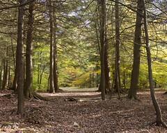 Ricketts Glen State Park (Sandra Mahle) Tags: rickettsglenstatepark pennsylvania lakejean water lake autumn marsh fallseason colorsofautumn