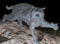 Wildcat Territory (Rick Bolin) Tags: rickbolin wildcat statue sigma85mmf14art lumixs1 weberstateuniversity mascot ogdenut photo photos photographer photography