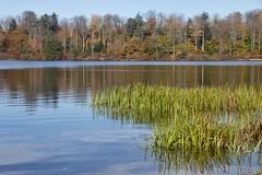 Ricketts Glen State Park - Explored October 22, 2019 (Sandra Mahle) Tags: rickettsglenstatepark pennsylvania lakejean water lake autumn marsh fallseason colorsofautumn ngysaex