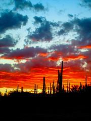 IMG_4853_edited (richwestproductions) Tags: lakepleasant sunset arizona cactus cacti silhouette