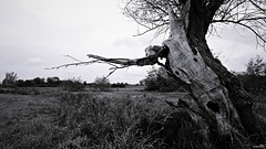 Don't Cry (Un jour en France) Tags: strange étrange arbre tree nature campagne bocage ciel sky cry noiretblanc noiretblancfrance canoneos6dmarkii canonef1635mmf28liiusm monstre