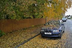 høst (KvikneFoto) Tags: nikon1j2 hamar høst autumn fall