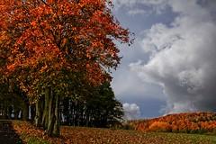 BRAUNHAUSEN Okt. 2019 B (jadwigatrzeszkowska) Tags: jesień braunhausen bebra hesja niemcy jadwigatrzeszkowska krajobraz widok drzewa panasonic