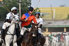 equestrian (24)