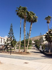 IMG_2907 (rugby#9) Tags: canaryislands loscristianos bluesky apartment apartments tree palmtrees trees palmtree canaries tenerife sky mountain cactus cacti path people