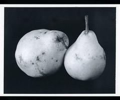 Les fruits de l'automne (JJ_REY) Tags: poires pears automne autumn instantfilm mediumformat fuji fp3000b bw toyofield rodenstock aposironarn150mmf56 polaroidback405 colmar alsace france