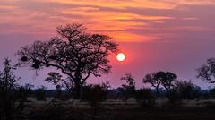 Kruger Sunset (haf2.ser) Tags: sunset landscape southafrica krugernationalpark kruger krugersunset