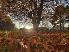 Autumn Challenge (UCD Staff Photography Club) Tags: