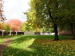 Autumn colours in Preston (Tony Worrall) Tags: preston lancashire lancs autumn seasonal cool colors colourful trees nature outside natural leaves fall buy sell sale bought item stock ilobsterit instagram account location places visit british english scene scenery lovely nice treat great season love venue green