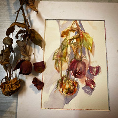 Day 1535. The #rose #painting for today. #watercolour #watercolourakolamble #sketching #stilllife #flower #art #fabrianoartistico #hotpress #paper #dailyproject (akolamble) Tags: rose painting watercolour watercolourakolamble sketching stilllife flower art fabrianoartistico hotpress paper dailyproject
