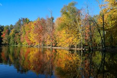 Watts New? (amillionwalks) Tags: 2019 october fall foilage colours reflections yellow red blue green orange water trees paris watts pond dazzling display