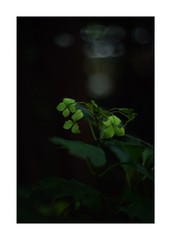 This work is 1/12 works taken on 2019/9/16 (shin ikegami) Tags: sony ilce7m2 a7ii sonycamera 50mm lomography lomoartlens newjupiter3 tokyo 単焦点 iso800 ndfilter light shadow 自然 nature naturephotography 玉ボケ bokeh depthoffield art artphotography japan earth asia portrait portraitphotography