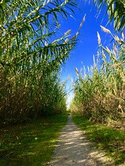 iph8211 (gzammarchi) Tags: italia paesaggio natura pianura campagna ravenna sanmarco strada sterrato canneto poesia haiku