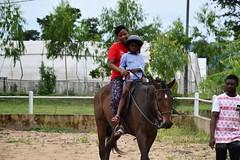 equestrian (23)