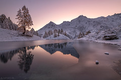 Dawn colors in the snow - Lac bleu (Captures.ch) Tags: aufnahme capture landscape alpen alps baum berge forest glacier gletscher himmel hügel lake landschaft lärche larch mountains see stein sky stone tal tree valley wald switzerland swiss schweiz wallis evolène lacbleu valais valdhérens autumn fall foliage herbst dusk morgen morgendämmerung morning sonnenaufgang sunrise clear klar schnee snow