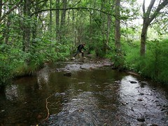 River Spey (cas177) Tags: river forest aviemore scotland nature spey