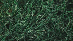 P1020575 (rozenn.rgr) Tags: lumixgx80 lumixgx85 lumix lumixg panasonic panasoniclenses 1235mmf28 1235mm night nature sunset flower flowers smoke steam m43 micro43 43 hybride