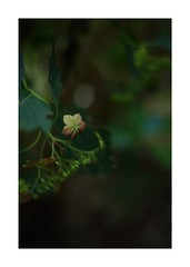 This work is 5/12 works taken on 2019/9/16 (shin ikegami) Tags: sony ilce7m2 a7ii sonycamera 50mm lomography lomoartlens newjupiter3 tokyo 単焦点 iso800 ndfilter light shadow 自然 nature naturephotography 玉ボケ bokeh depthoffield art artphotography japan earth asia portrait portraitphotography