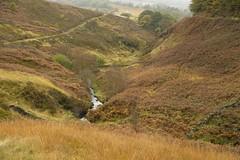 WildmoorstoneBrook (Tony Tooth) Tags: nikon d600 tamron 2470mm landscape countryside goytvalley wildmoorstonebrook brook stream creek moors moorland buxton derbyshire october drizzle rainy