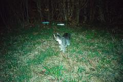 (Just A Stray Cat) Tags: kodak ultramax 400 cat cats kitty kittens kitties gato stray feline felines natura 35mm 35 mm film analog analogue mju mjuii ii