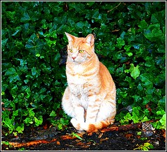 Hedgerow Pussie ... (** Janets Photos **) Tags: uk eastyorkshire hedges greenery cats feline