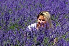 P1120889 (alainazer) Tags: valensole provence france fiori fleurs flowers fields champs colori colors couleurs lavande lavanda lavender
