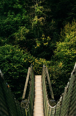 Bridge over the River Wye (M.T.A.V) Tags: bridge tree wyevalley river woodland perspective path relaxing forestofdean