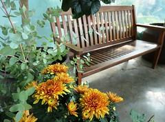Happy Bench Monday! (shelly.morgan50 (mostly off)) Tags: benchmonday happybenchmonday nature park autumn usa midwest shellymorgan50 panasoniclumixdczs200 mums bench patio hbm flowers