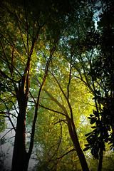Backyard Sunset. fuji xt10 18-55mm (ToddGraves2) Tags: