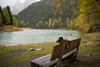 abandoned... (Toni_V) Tags: m2402270 digitalrangefinder rangefinder messsucher leicam leica mp typ240 type240 35lux 35mmf14asphfle summiluxm hiking wanderung randonnée escursione alps alpen bergsee mountainlake palpuognasee laidapalpuogna herbst autumn horse bench bank albulatal predapalpuognaseebergün graubünden grisons grischun switzerland schweiz suisse svizzera svizra europe ©toniv 2019 191019