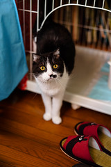 kuro (neco_onsen) Tags: cat planar zeiss