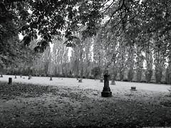 2019-10-20 Grand View Cemetery (B&W) (01) (2048x1535) (-jon) Tags: anacortes fidalgoisland sanjuanislands skagitcounty skagit washingtonstate washington cemetery grandview grandviewcemetery winter headstone marker tree graveyard landscape bleak bw blackandwhite fall leaves a266122photographyproduction canonpowershotelph180 canon powershot elph180 halloween allhalloween allhallowseve allsaintseve