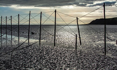 Salmon fishing structures at Sandyhills Bay, Solway, Scotland (peterclayton2512) Tags: scotland fishing nets sandyhillsbay solway