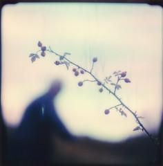 autumnal whispers (Neko! Neko! Neko!) Tags: colours autumn rosehips dream shadows emotion expressive polaroid polaroidoriginals analogue rb67