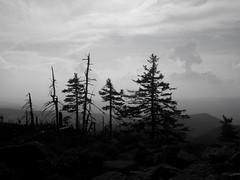 on a top (Darek Drapala) Tags: trees top snieznik mountains bw blackwhite blackandwhite nature hill dark panasonic poland polska panasonicg5 lumix light landscape mood mystery mystic