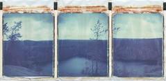 Lake view (Maija Karisma) Tags: polaroid instant pola littlebitbetterscan polaroid250landcamera triptych lake 669 expiredfilm peelapart roidweek2019 fall day2