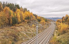 Empty railway tracks (Tamara Lopes photographer) Tags: autumn background beautiful color colorful countryside direction fall forest green infrastructure landscape light line long natural nature nobody norway nsb old orange outdoor outdoors park path rail railroad railway road scenery scenic season sky station steel straight track traffic train transit transport transportation travel tree trees vestfold view way yellow