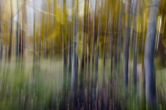 Monday Morning Montage (Steve Corey) Tags: montage composite aspentrees icm mountains leaves fall autumn stevecorey