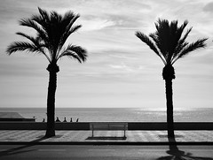 Double palm tree (paulrichardson81) Tags: xt3 fujifilm black white acros palm tree bench beach seaside