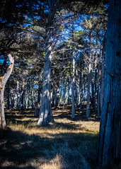 Del Monte Forest No.4 (CDay DaytimeStudios w /1 Million views) Tags: ca pebblebeach water 17miledrive pacificcoasthighway bluesky california highway1 montereyca pacificgrove carmelca ocean pacificcoast beach sky seascape coastline landscape rocks montereybay