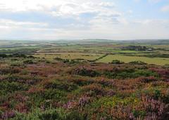 (IV) Far left - Pembrokeshire Coast Path - Day 4 (Elisa1880) Tags: pembrokeshire coast path pwll deri aber bach penbwchdy wales heath heide heather heidelandschap landschap landscape