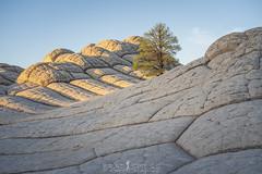 All Alone (ihikesandiego) Tags: white pocket vermilion cliffs national monument northern arizona lone tree